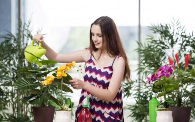 Rośliny domowe – naturalne filtry powietrza