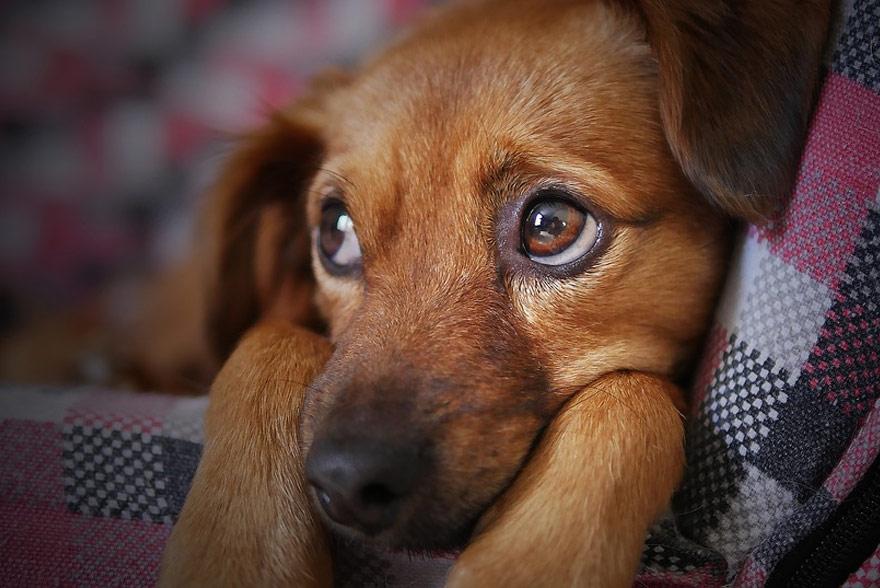 Pies w domu, co wiedzieć trzeba?