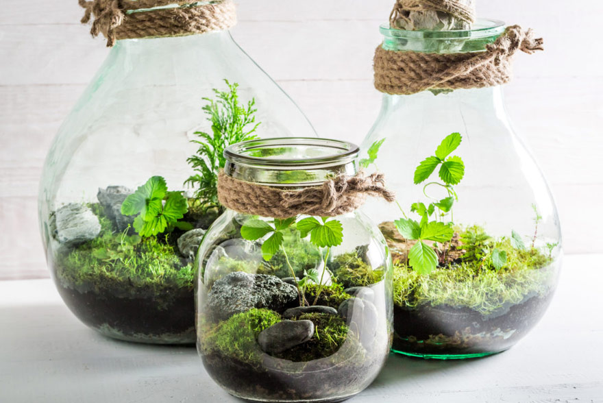 ochrona roślin przed zwierzętami domowymi