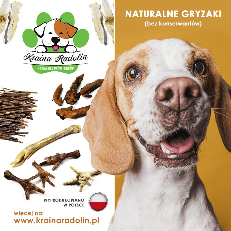 naturalne suszone gryzaki dla psa