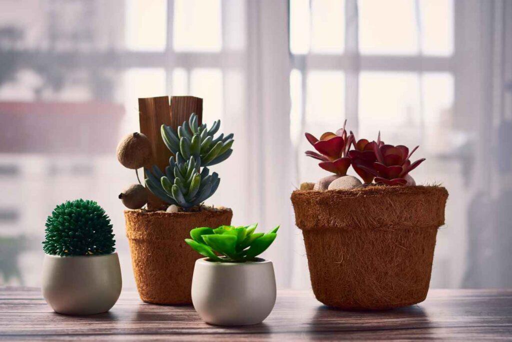 Kaktusy i sukulenty najlepiej prezentują się z poliestru i pianki