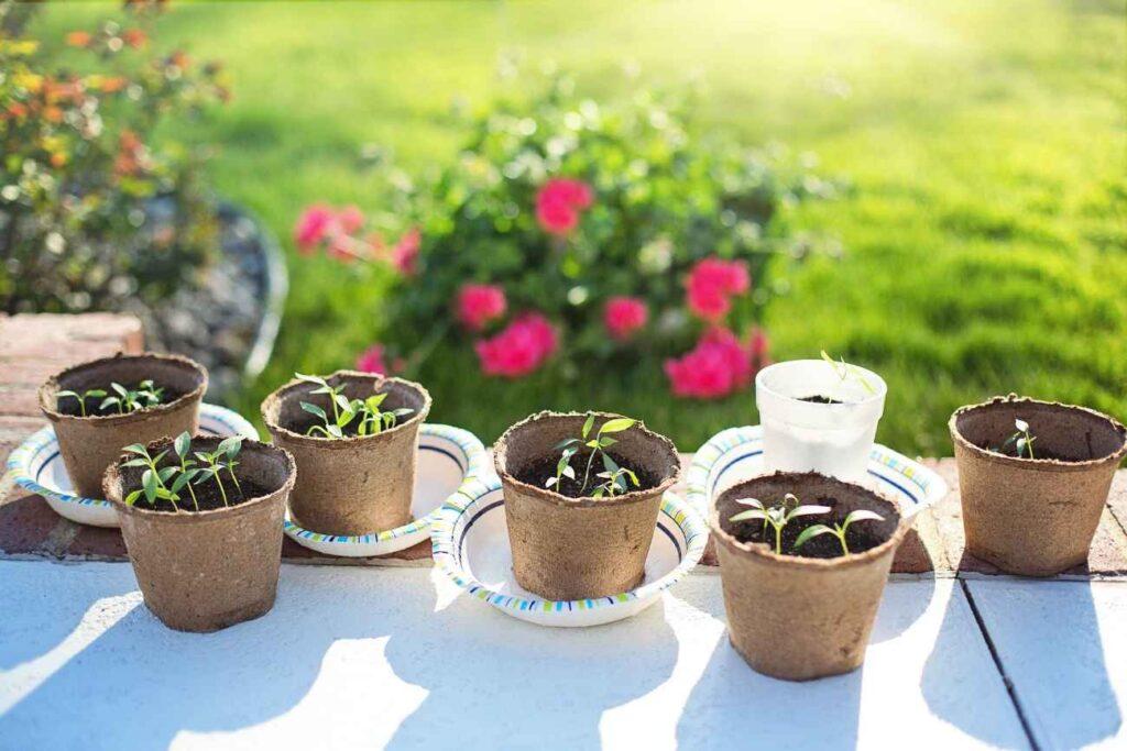 Wentylowanie sadzonek polega na ich wystawianiu na powietrze
