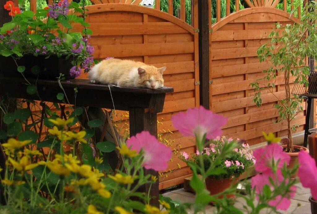 ukwiecony taras z kotem
